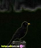 robin art