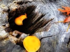 fall-mushroom