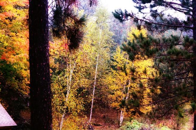 forest-n-mi
