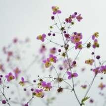 flower-floral-blossom-nature