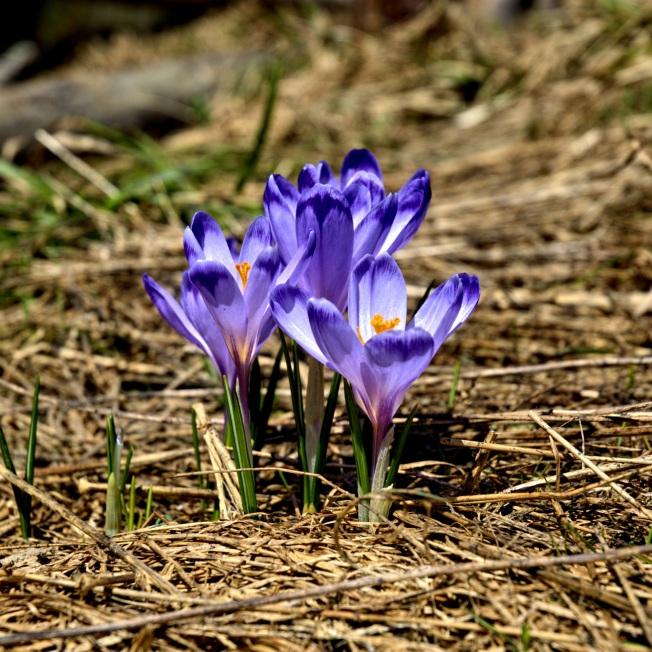 tatry-koscieliska-valley-winter-spring