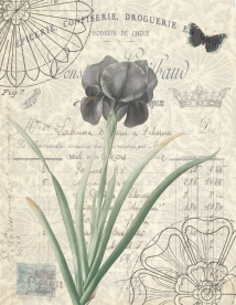 Black Iris and Mourning Cloak Butterfly On Invoice