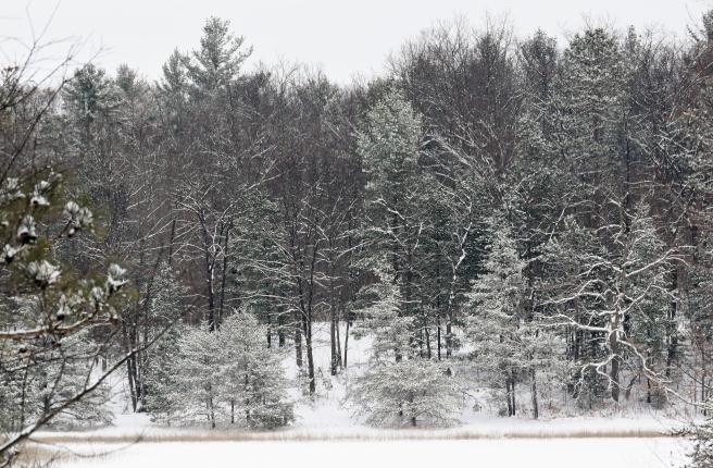 February 11 2018 Snowy Treesacross lake