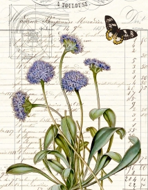 Blue Pincushion and butterfly botanical paper 8.5 x 11