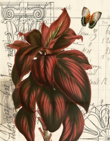 Red Leave Botanical Print