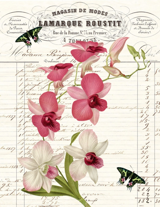 Dendrobium Paper with Butterfly on Invoice Paper 8.5 x 11