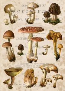 Nature Study #2 Mushroom Field Study 5 x 7