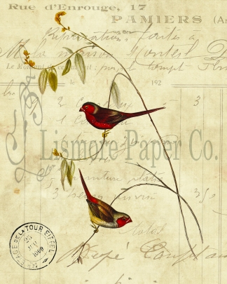 2 Crimson Finch Invoice Paper 8 x 10 JPEG Watermark