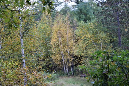 Birch Cluster Fall 2018