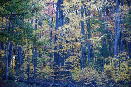 Color in the Woods