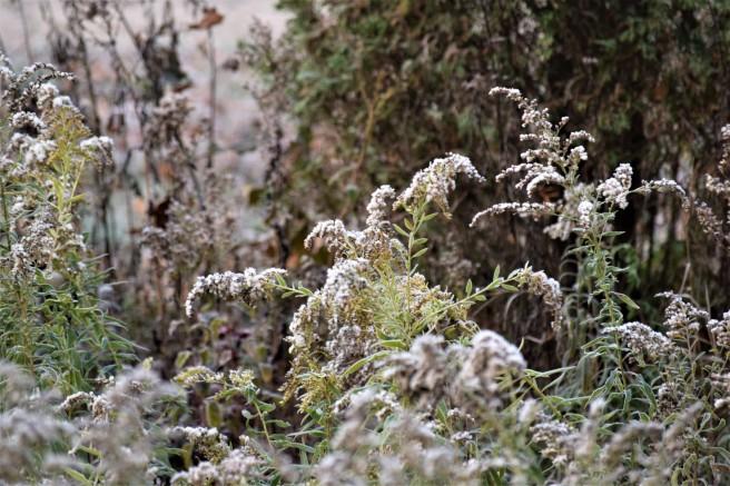 Frosty Garden 4 Oct 18