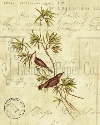 Great-billed Gerygone Invoice Paper 8 x 10 Watermark