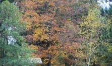 Maple Tree on Hill