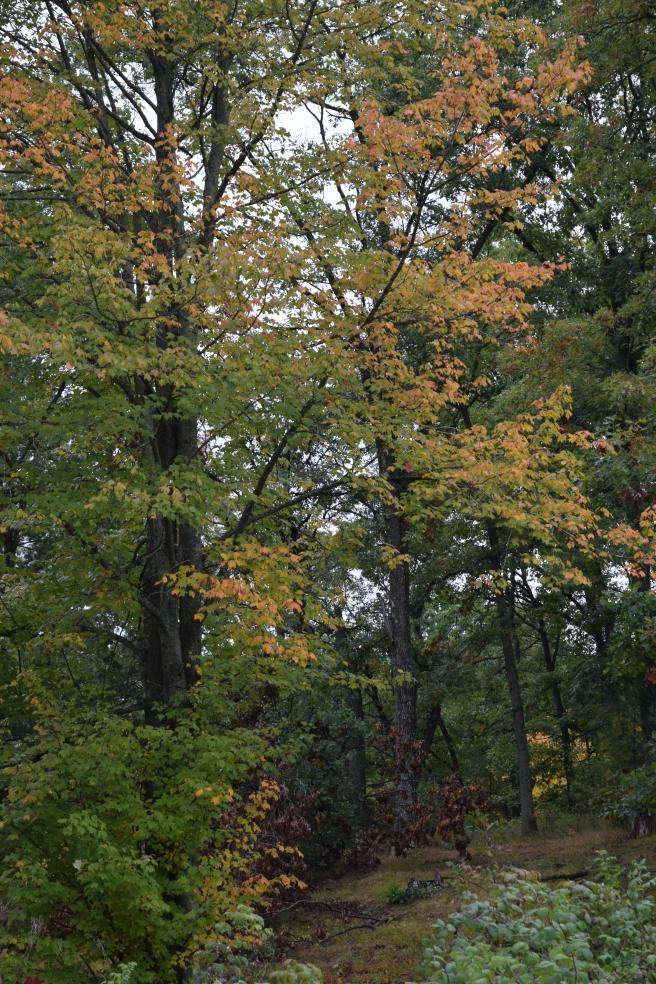 Woods Fall 2018